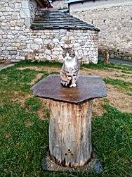 Le chat Ratafia - miellerie Lestaral.jpg