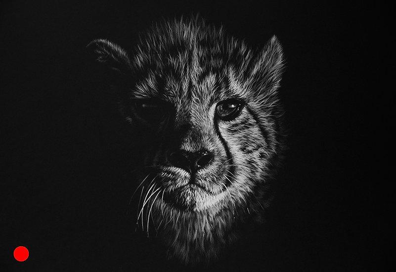 Sanbona cheetah