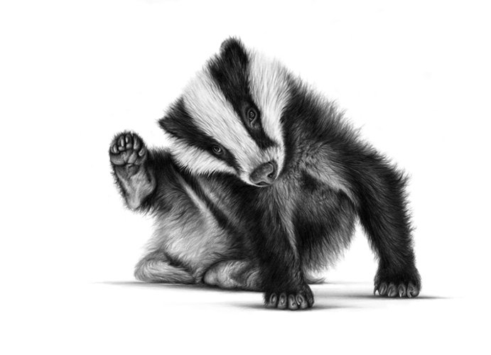 Billie badger scratching