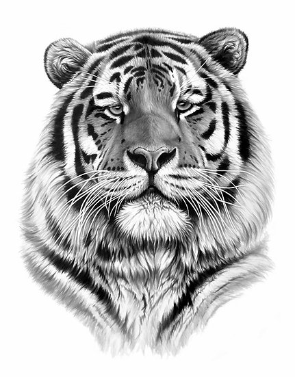 Tiger Pride III