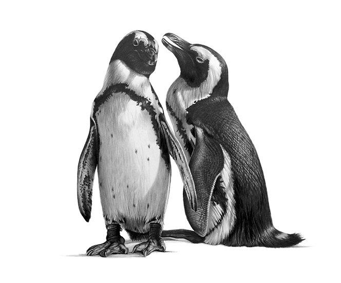 Penguin Chatter