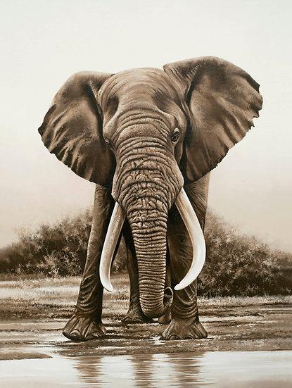 Valli Moosa - elephant