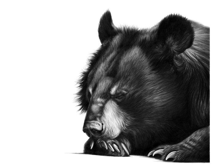 Jasper Snooze
