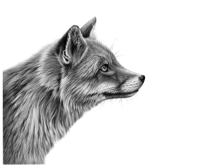 Roxy fox