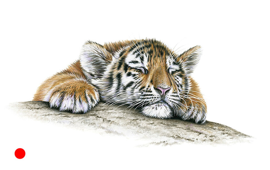 Snoozy too - SOLD available as print £80.00
