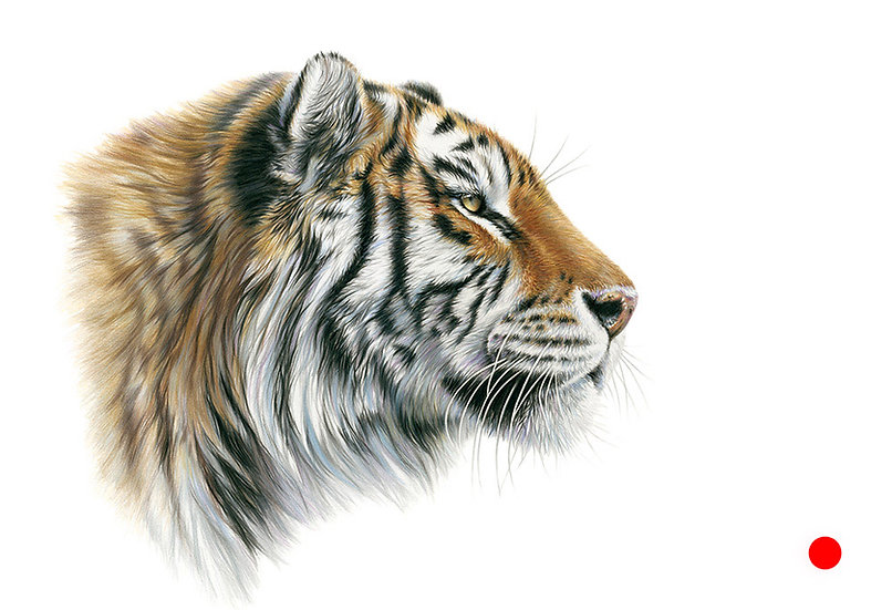 Tiger Pride - SOLD also available as a print