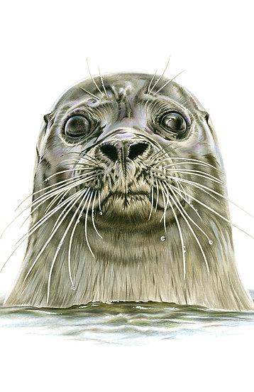 Seal - Phone Case
