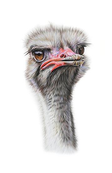 Ostrich - Phone Case