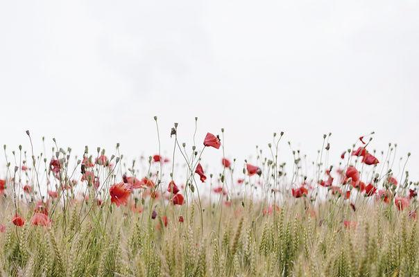 flores que recuerdan a personas
