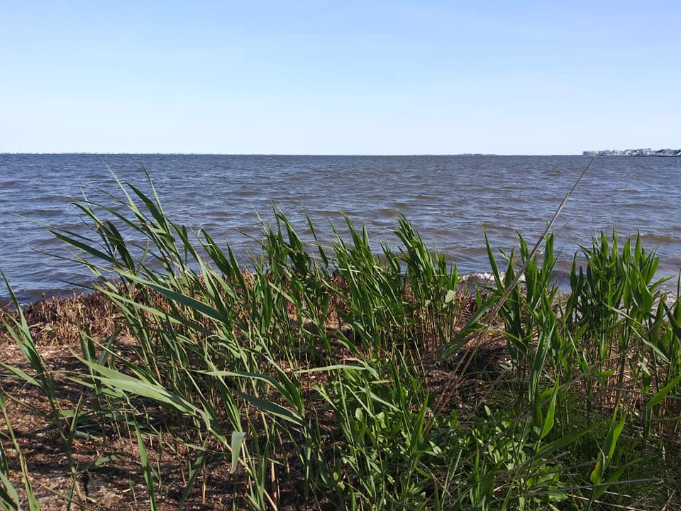The Barnegat Bay