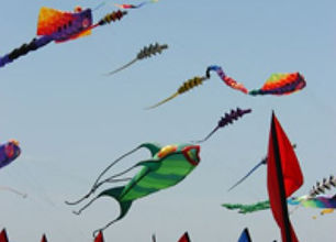 wild kite.JPG