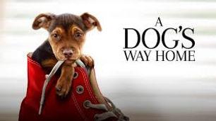 dogs way.jpg