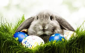 Get your bunny on this weekend