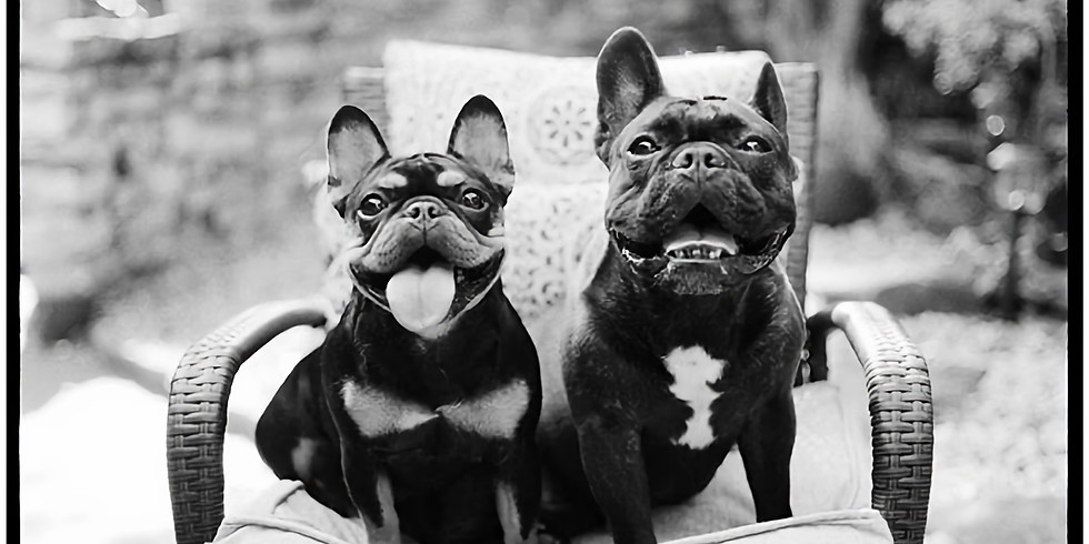 Creating Authentic Dog Portraits