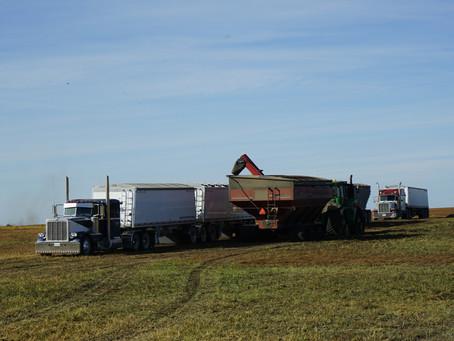 Harvest in Saskatchewan - The Sequel