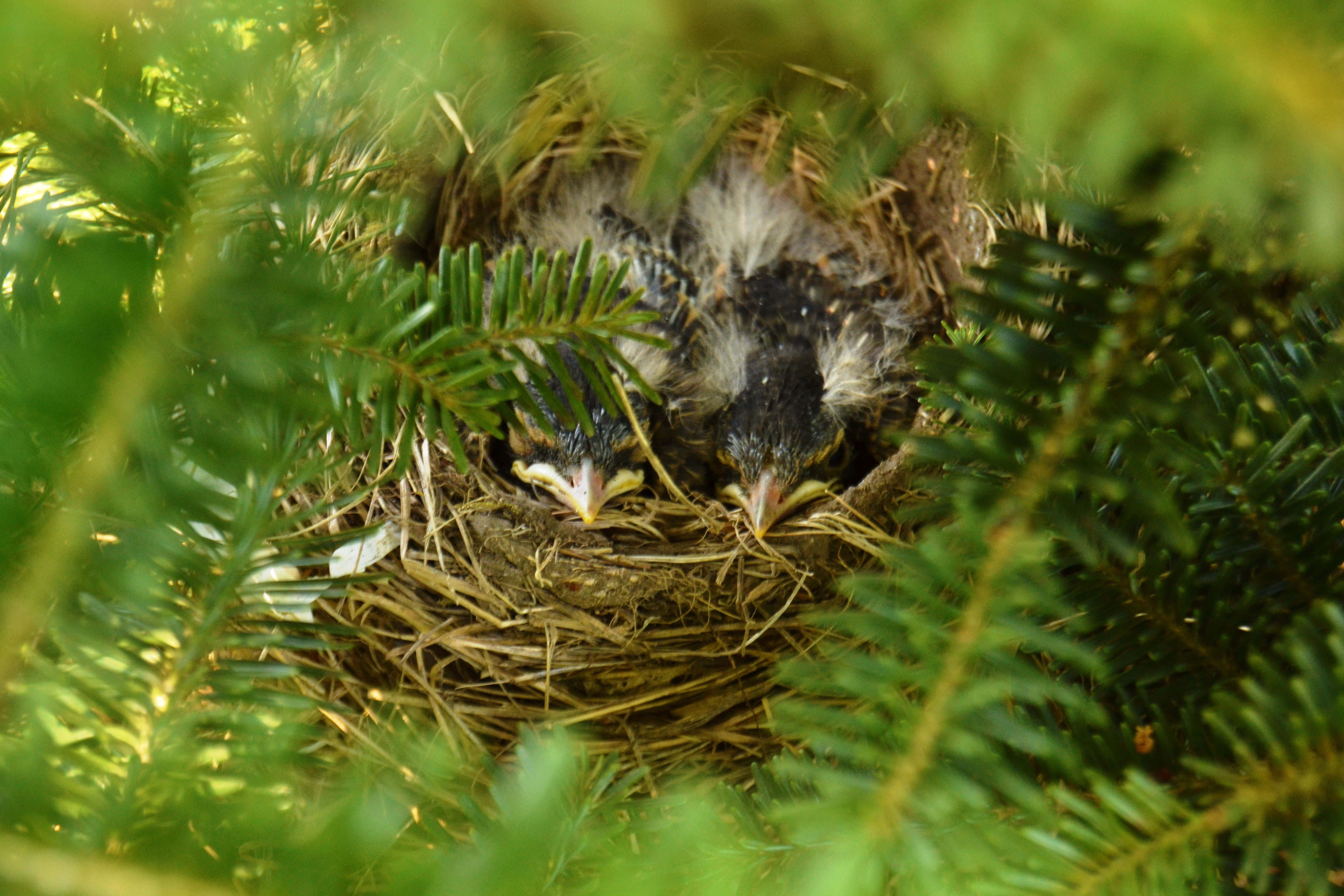 Evergreen supports wildlife...