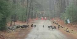 16 Turkeys in November