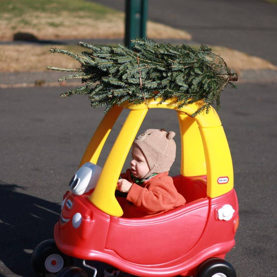 """I got my tree!"""