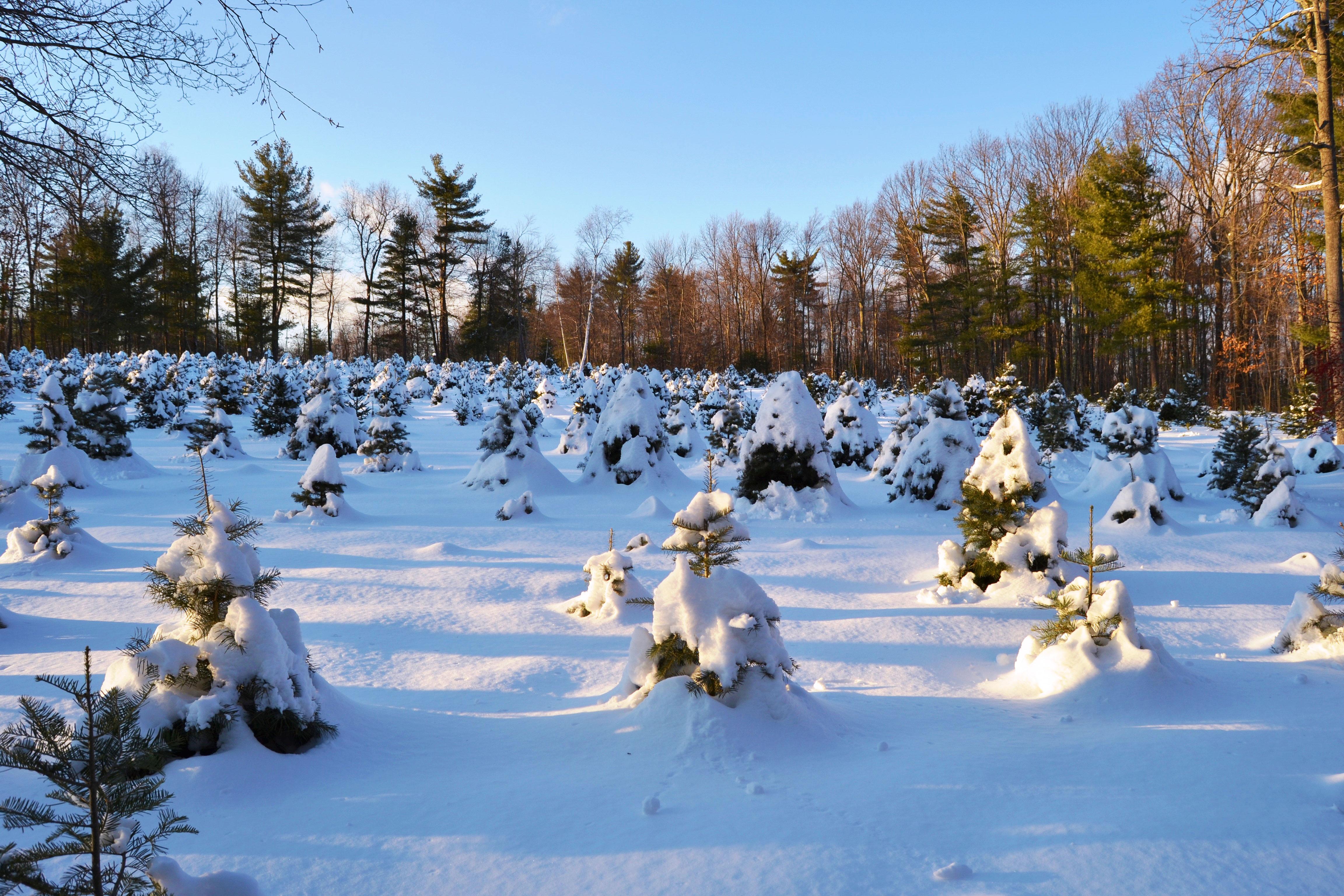 Mid-winter Sunrise at Evergreen Farm