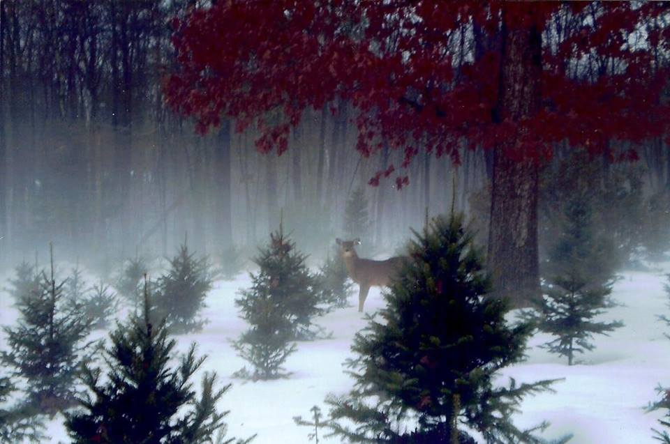 Deer in the Snow Fog