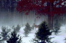Deer in the Snow Fog