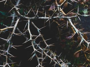 """""""Living Among Thorns"""""""