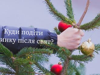 Куди здати новорічні дерева в Ірпені?