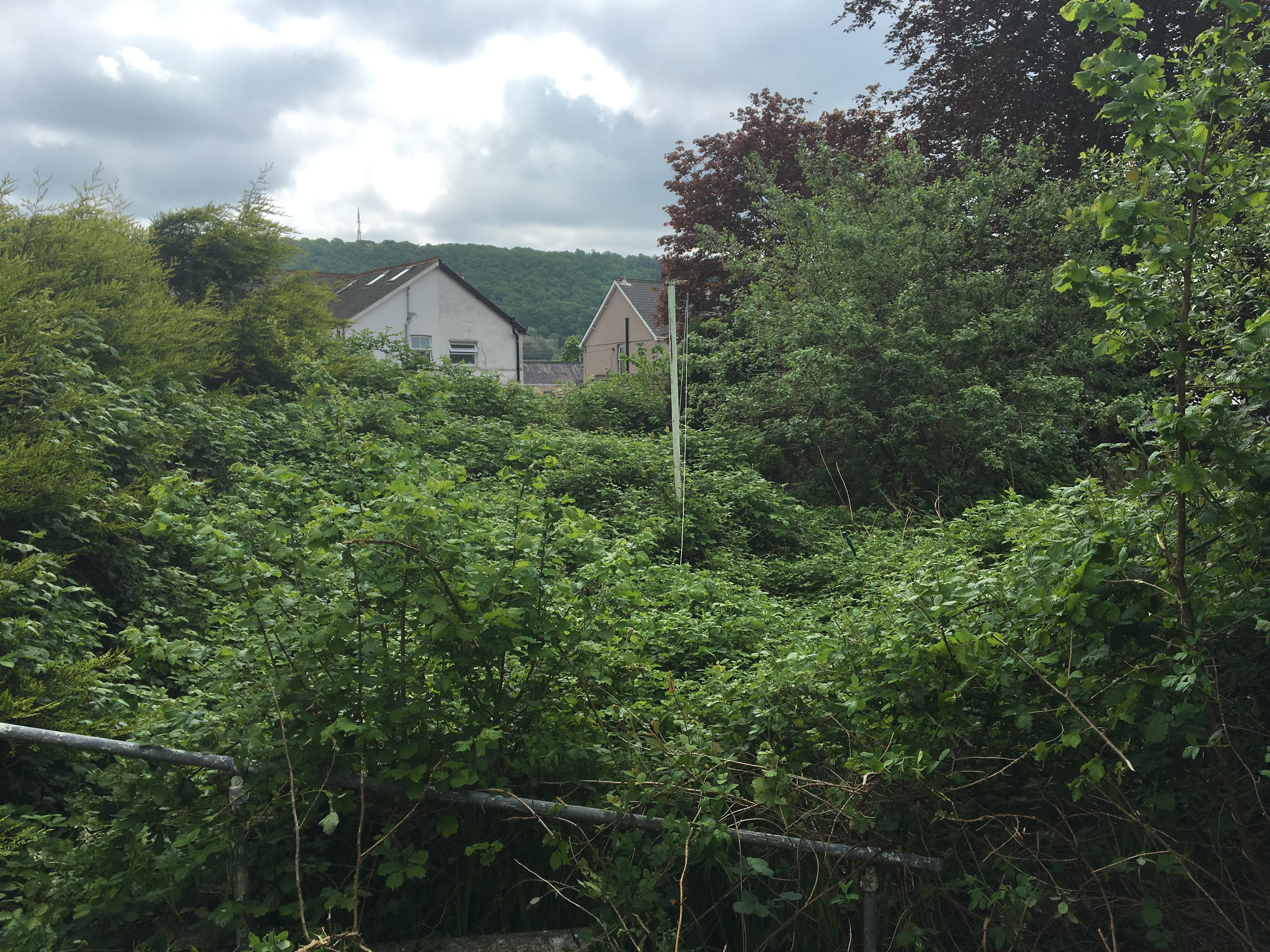 Large garden overgrown