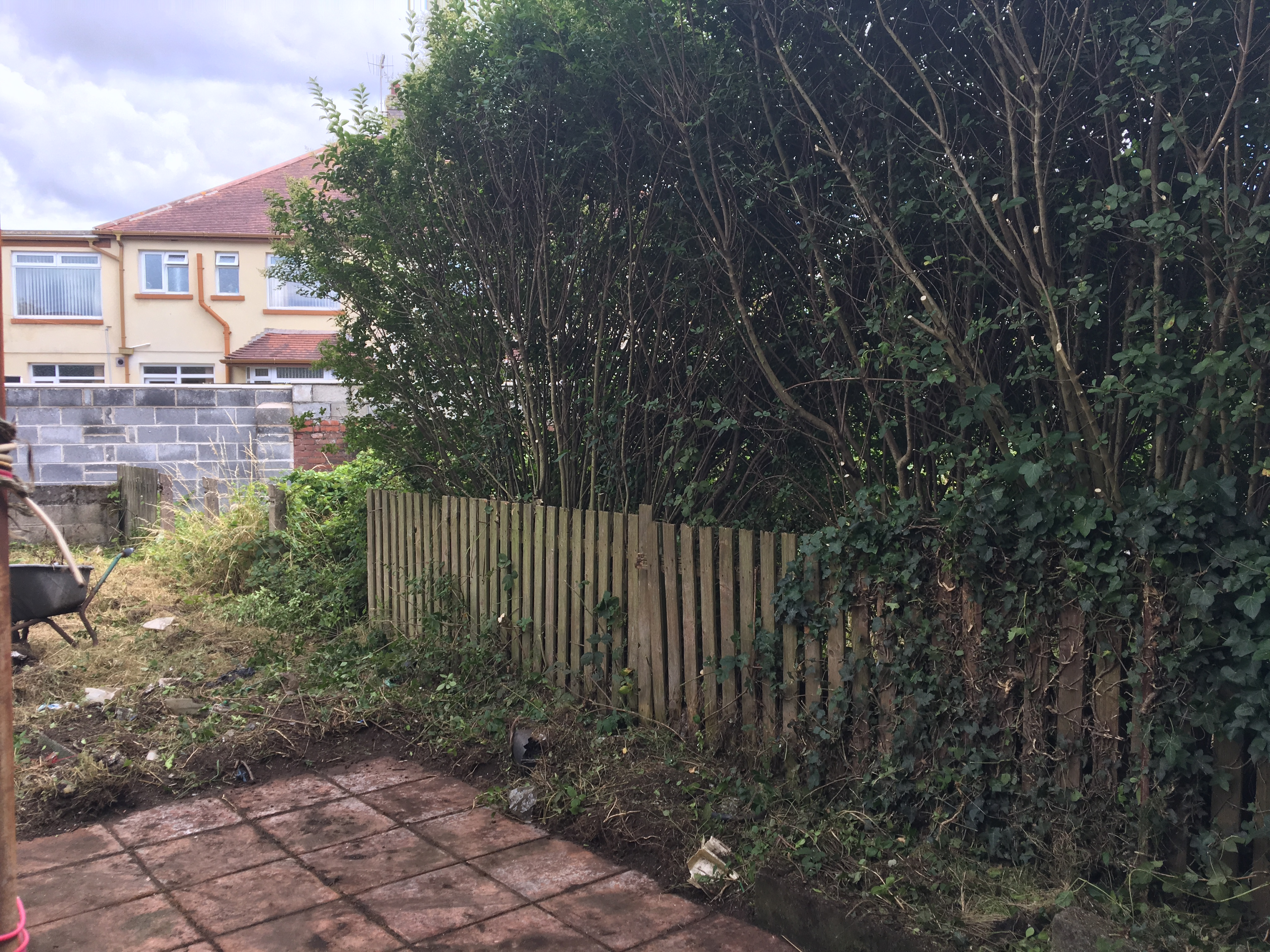Neighbouring property bushes CutBack