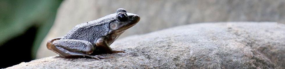 Frog IMG_2161.jpg
