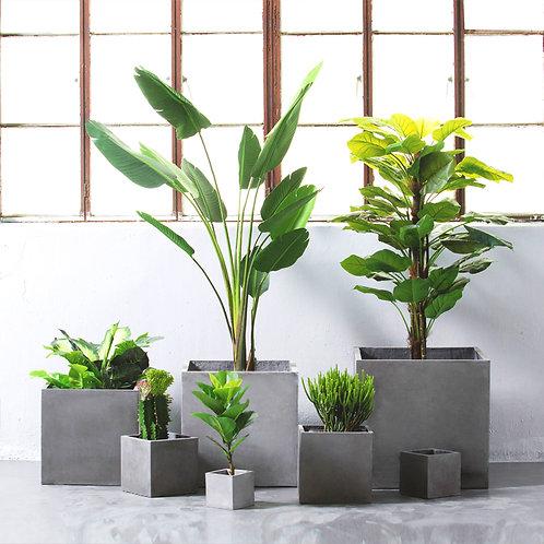 Cement planter square