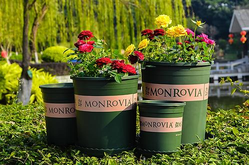 Monrovia Plastic Pot