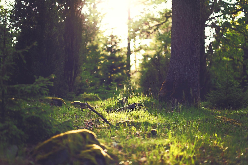 Camp Curiosity Woodland