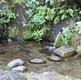新潟 山北 鰈山清水