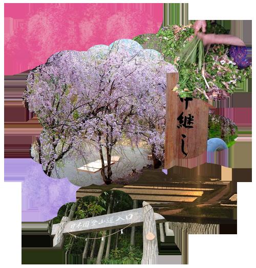 春 新潟県 秘境 絶景 村上市 山北 さんぽく