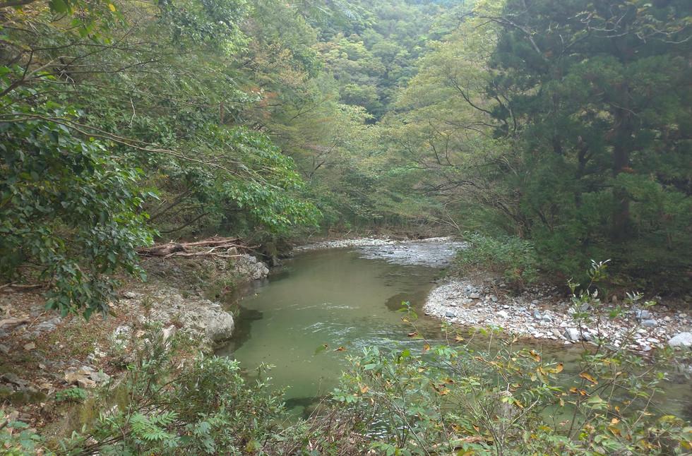 新潟 山北 小俣の渓流 紅葉