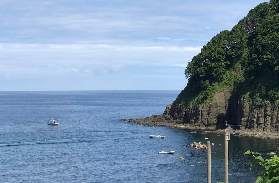 新潟 山北 もずく