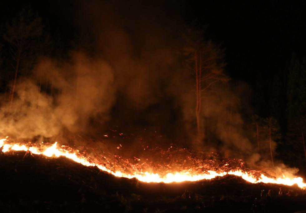 新潟 山北 赤かぶ 山焼き 赤いルビー