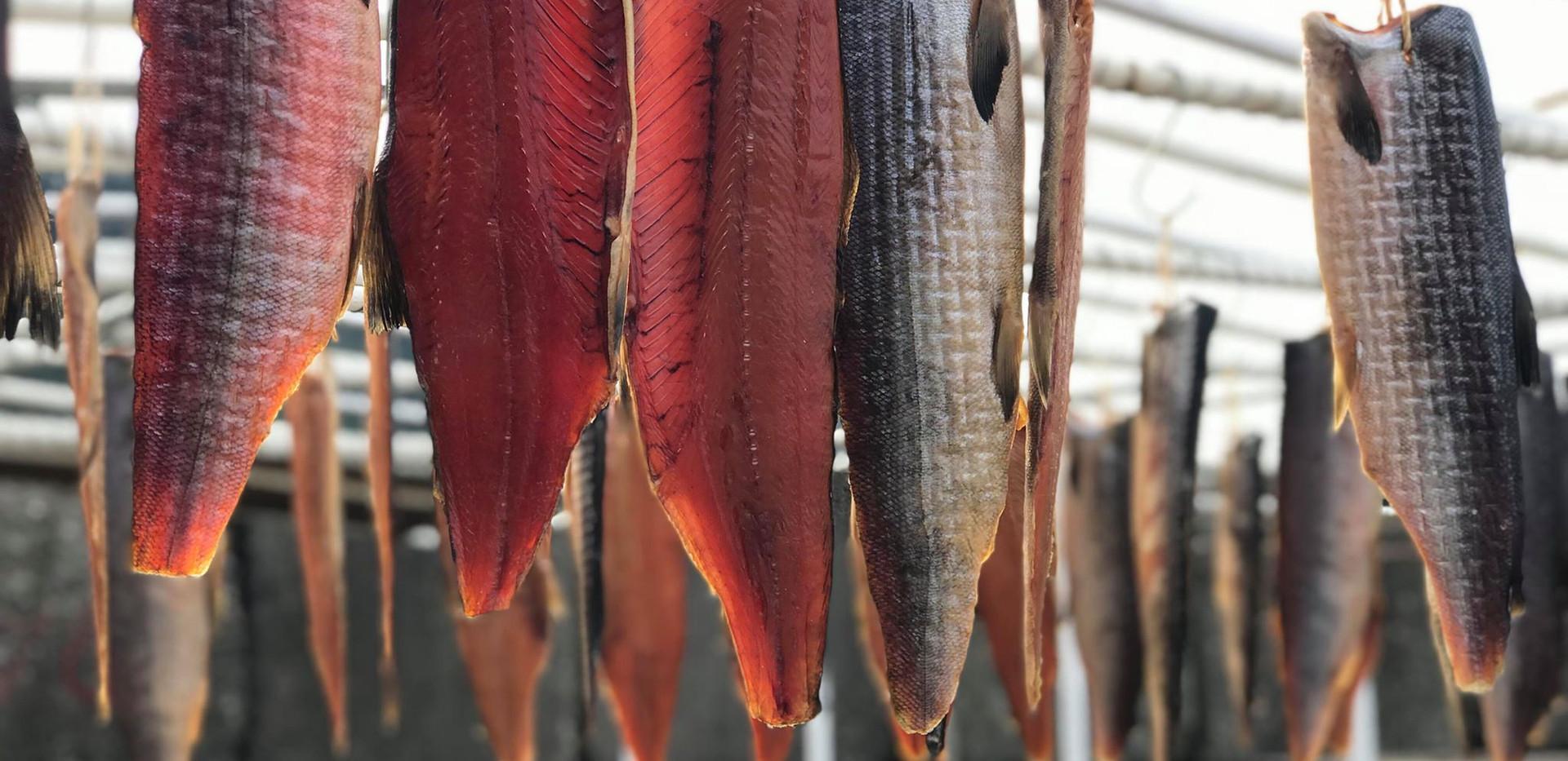 新潟 山北 塩引き鮭 コド漁