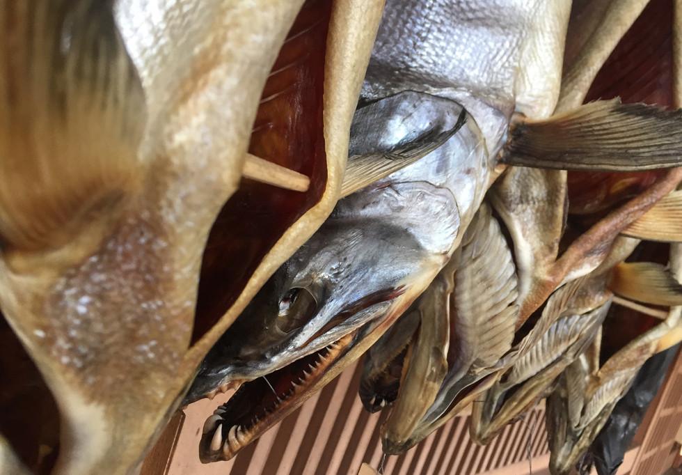 新潟 山北 塩引鮭