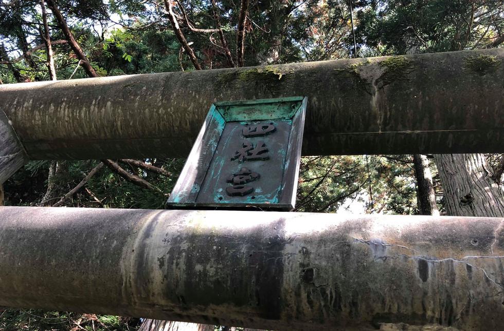 新潟 山北 小俣白山神社 大杉