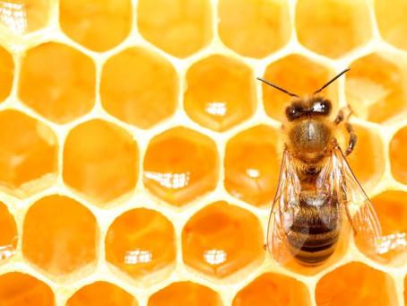 Love of Honey