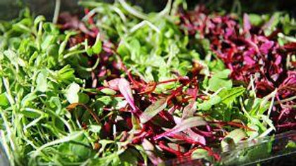 Monthly Subscription-Microgreens Delivery