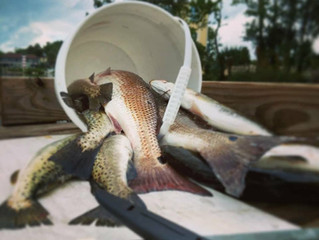 Fall trout bite is HERE!