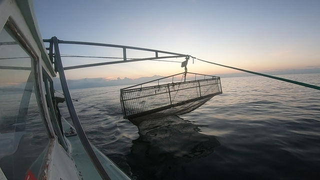 Click to see video of shrimp boat in action!