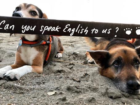 英語ができるとは?
