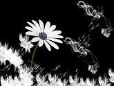 flower-2130622_1920.jpg