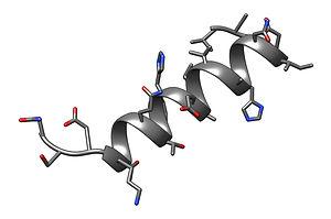 peptide1.jpg