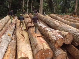 Pernel Media commissioned by Ushuaïa TV to produce timber trafficking feature documentary