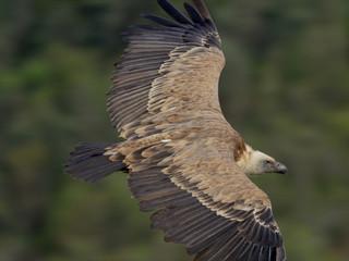 TBI : France TV Group orders vulture doc